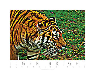 Poster featuring the photograph Tiger Bright  Naturally Rare Poster by David Davies