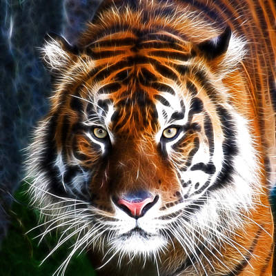 Tiger Close Up Poster by Steve McKinzie