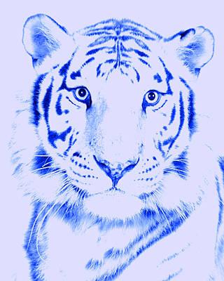 Tiger Eye Poster by J D Owen