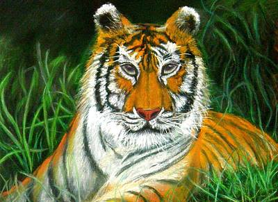 Poster featuring the pastel Tiger Eyes - Pastel by Antonia Citrino