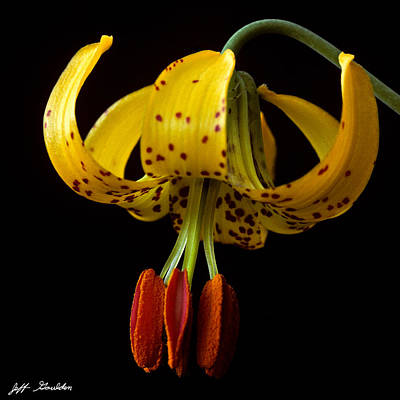 Poster featuring the photograph Tiger Lily by Jeff Goulden