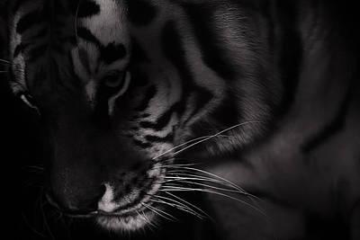 Tiger Monochrome Poster
