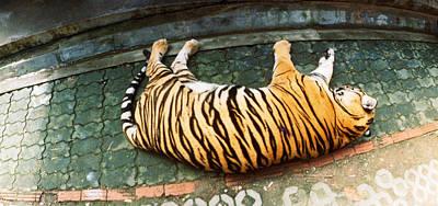 Tiger Panthera Tigris Sleeping Poster by Panoramic Images