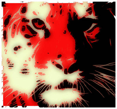 Tiger Red Poster by Tilly Williams