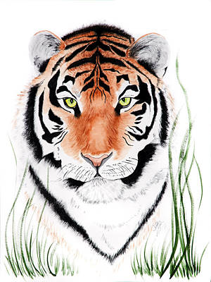 Tiger Tiger Where Poster
