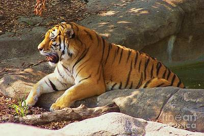 Tiger Tough Poster
