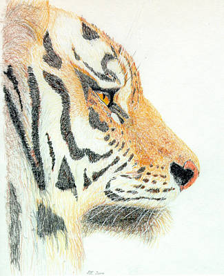 Poster featuring the drawing Tiger's Head by Stephanie Grant