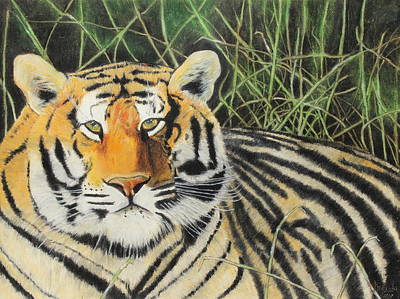 Poster featuring the painting Tigress by Jeanne Fischer
