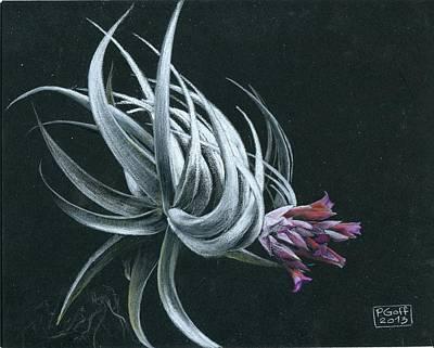 Tillandsia Piauiensis Poster by Penrith Goff