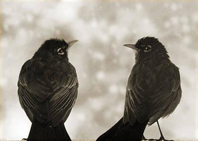 Timeless Robins Poster by Lisa Knechtel