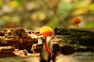 Tiny Mushroom Poster