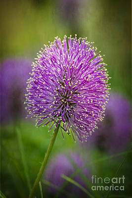 Tiny Purple Wildflower II Poster