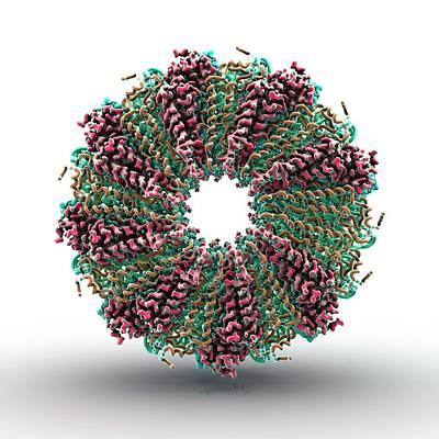 Tobacco Mosaic Virus Proteins Poster