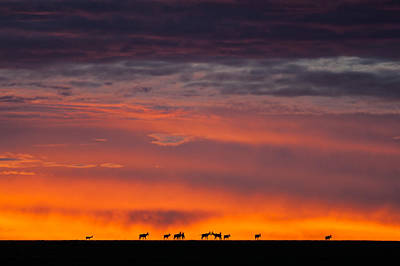 Poster featuring the photograph Topi Herd Sunrise by Mike Gaudaur