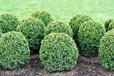 Topiary Plants Poster