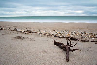 Topsail Island Driftwood Poster