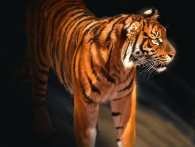 Poster featuring the digital art Torch Tiger 4 by Aaron Blaise