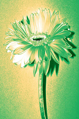 Touch Of Turquoise Zinnia Poster
