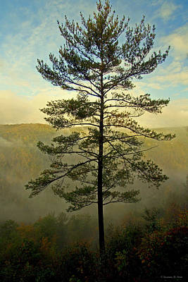 Poster featuring the photograph Towering Pine by Suzanne Stout
