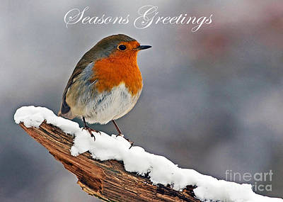 Traditional Christmas Robin Poster by Paul Scoullar