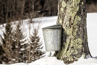 Traditional Sap Bucket On Maple Tree In Vermont Poster