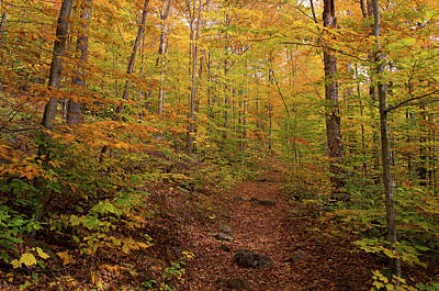 Trail In A Forest, Goodnow Mountain Poster