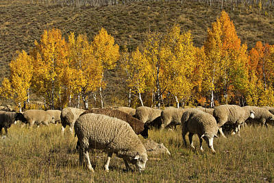 Trailing Of The Sheep Festival, Autumn Poster