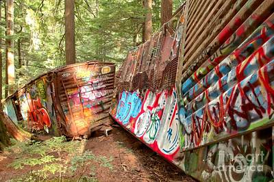 Train Box Cars In The Woods Poster