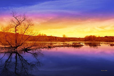 Tranquil Tree Reflection Landscape Poster by Christina Rollo