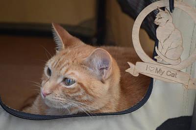 Traveling Cat - Orange Tabby Poster