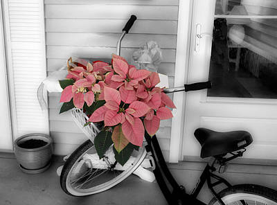 Traveling Poinsettia Poster