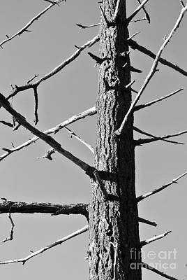 Tree Ancestor Poster