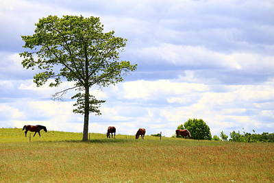 Tree And Horses Poster