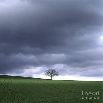 Tree And Stormy Sky  Poster by Bernard Jaubert