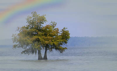 Poster featuring the mixed media Tree And The Rainbow by Bob Pardue