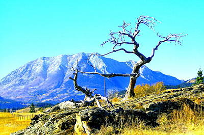 Tree Art By Nature Poster by Mavis Reid Nugent