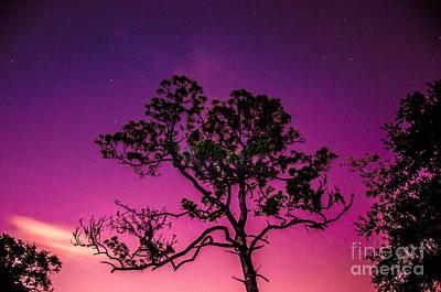 Tree At Night Poster