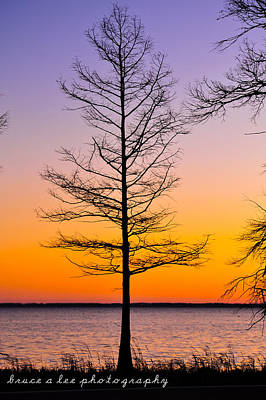 Tree At Sunset Poster by Bruce A Lee
