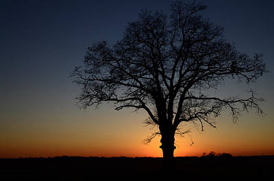 Poster featuring the photograph Tree At Sunset by Michael Donahue