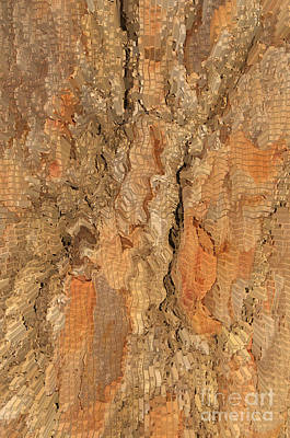 Tree Bark Abstract Poster by Cindy Lee Longhini