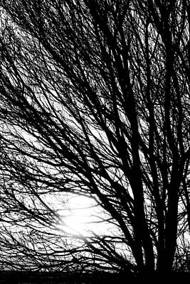 Tree Branches And Light Black And White Poster
