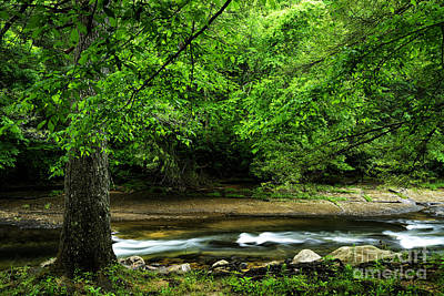 Tree By Cranberry River Poster