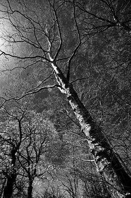 Tree Capillaries Poster