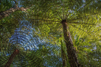 Tree Ferns From Below Poster