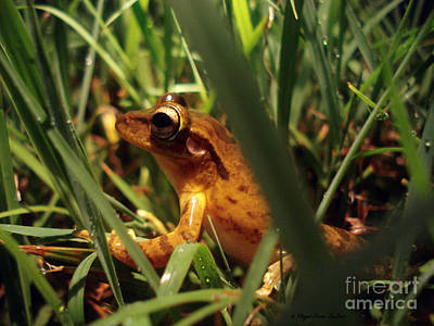 Poster featuring the photograph Tree Frog Chorus by Megan Dirsa-DuBois