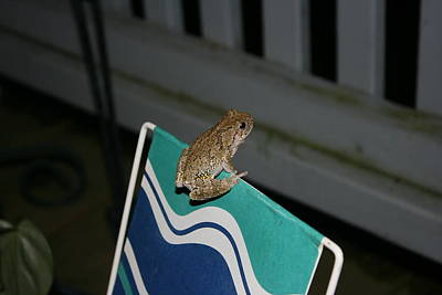 Tree Frog On A Planter Poster