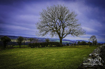 Tree - Hadrian's Wall Poster by Mary Carol Story