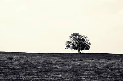 Tree In Field Poster