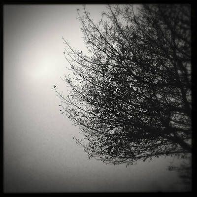 Tree In Fog Poster by Les Cunliffe