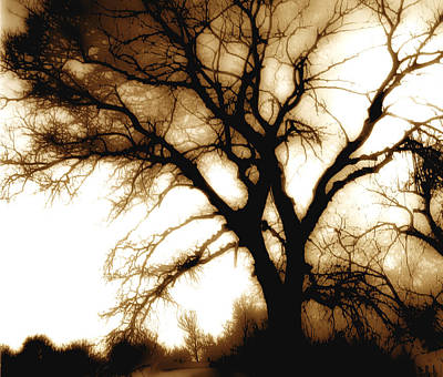 Tree In Sepia Poster